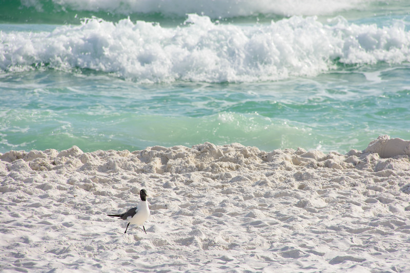Topsail Beach-55.jpg