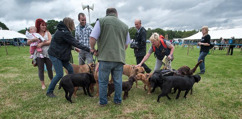Dogs P6210723.jpg
