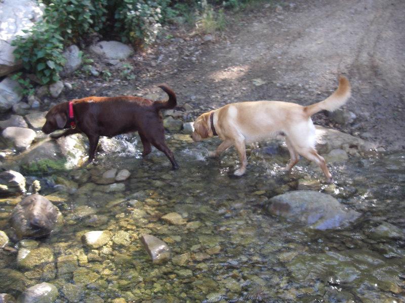 Good doggies :-)
