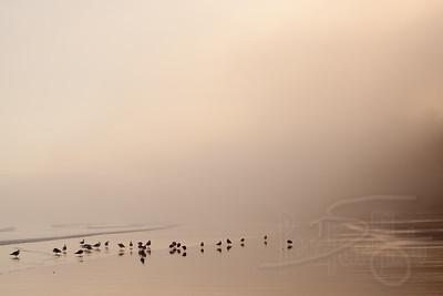 Morning coastal mist at Point of Arches, Shi Shi Beach, Olympic National Park, WA.