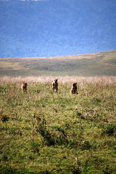 Ngorongoro (55).JPG