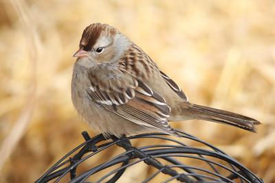 2013 Bird (4) - Oct-Dec