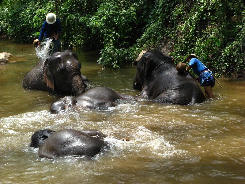 Bathing elephants at Mae Sa Elephant Camp, Chiang Mai province.