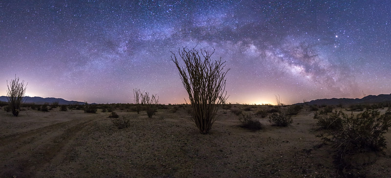 Panorama - Milky Way over an ocotillo in Anza-Borrego
