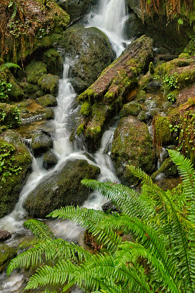 Trillium Falls Trail
