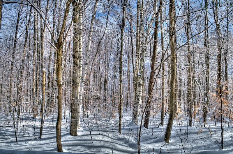 186 Tranquillity -winter LoRes.jpg