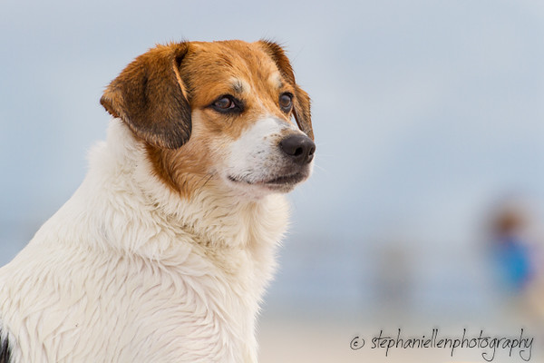 20141007dogs_fort_desoto_beach_Stephaniellenphotography.com-_MG_0033.jpg