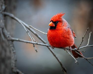 Our Garden 2021 Birds