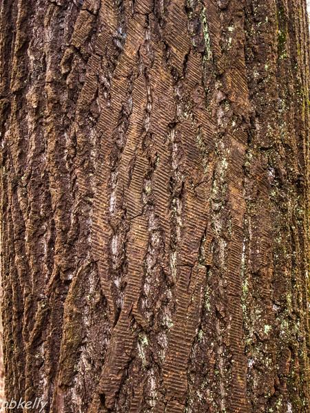 bark 013013-2.jpg
