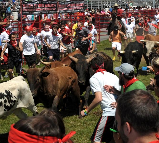 the-great-bull-run-art-glenn-07_45_20141019_2029332662.jpg