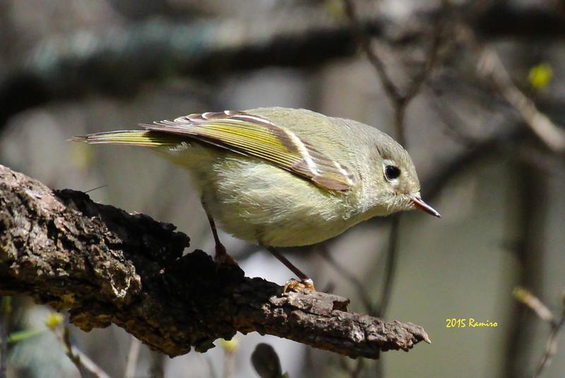 bird10 3-7-15 116.jpg