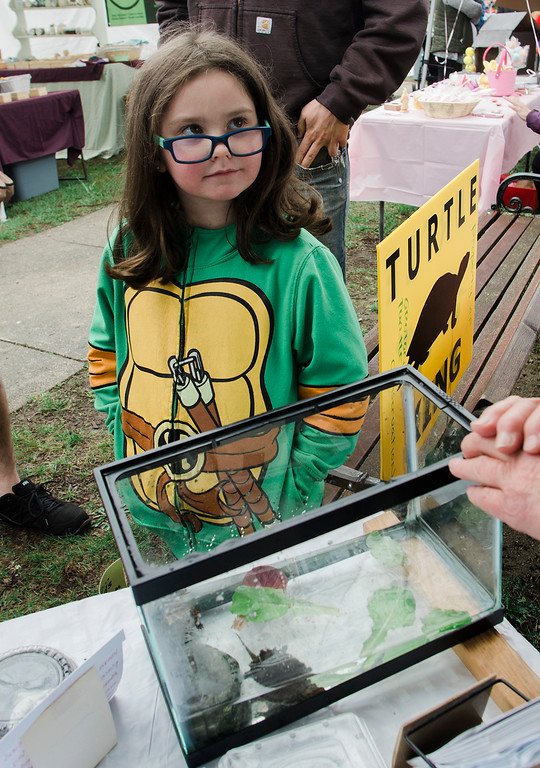. Izzy Brouillette, 6, of Fitchburg, takes a look at a turtle tank during Townsend\'s Annual Earth Day on the Common event on Saturday, April 22, 2017. SENTINEL & ENTERPRISE / Ashley Green