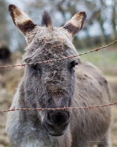 Donkeysoap