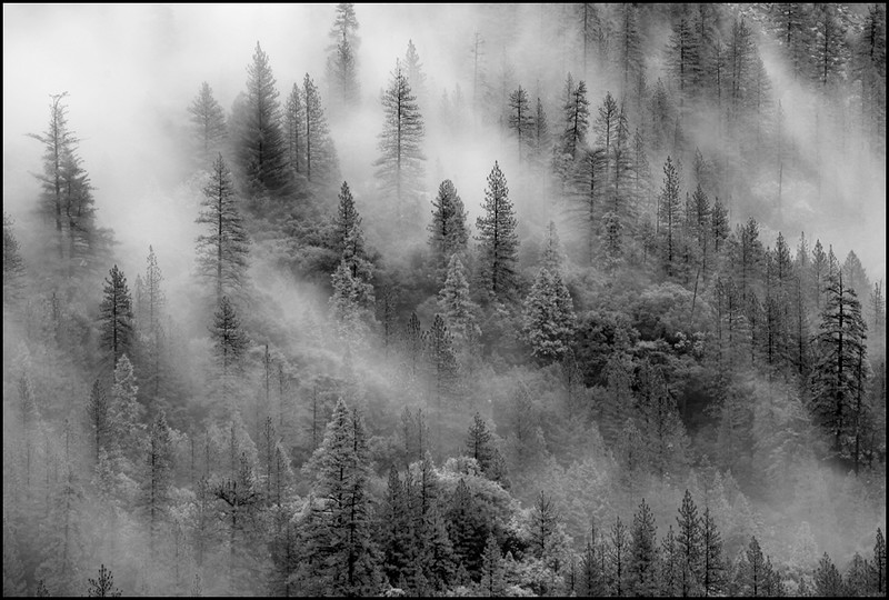 Alpine Mist web.jpg