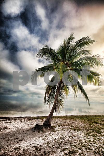 Love Palm Key West Fl.jpg
