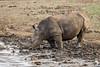 Thirsty work being a Rhino
