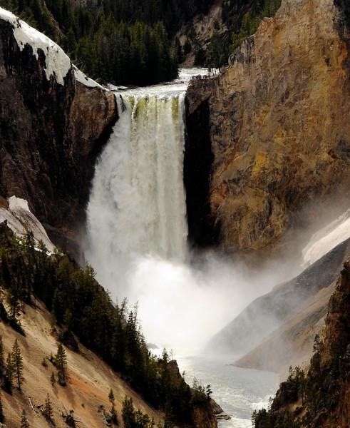 Yellowstone Favorites