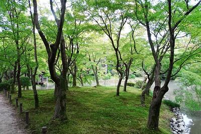 Kyoto Botanic Garden - 2014/10/20
