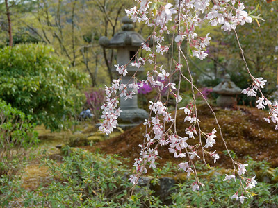 Tenryu-ji Temple and Its Garden of a Hundred Flowers