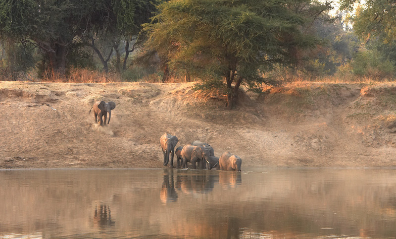 Elephant - 6321.jpg