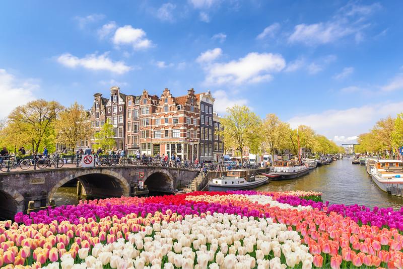 Amsterdam city tulip garden