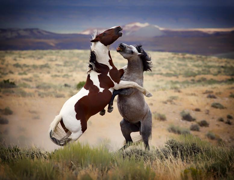 War Horses III