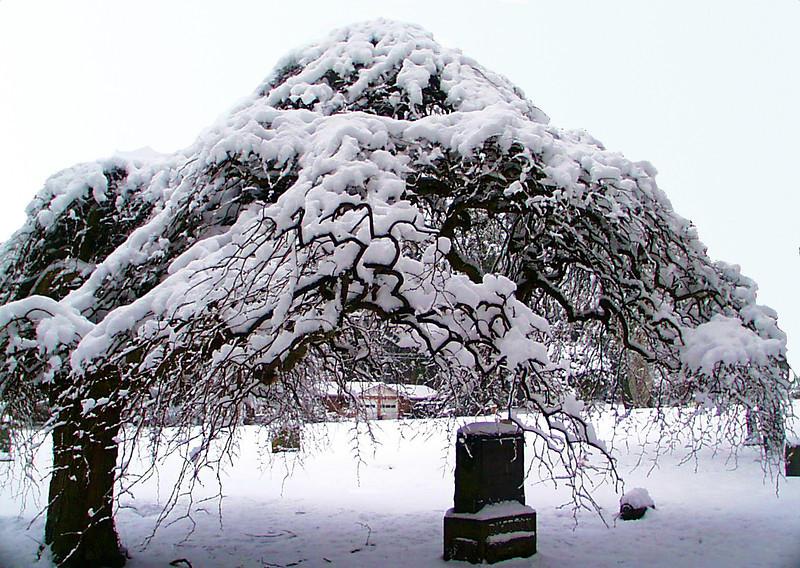 1-30-2002-snow#4.JPG
