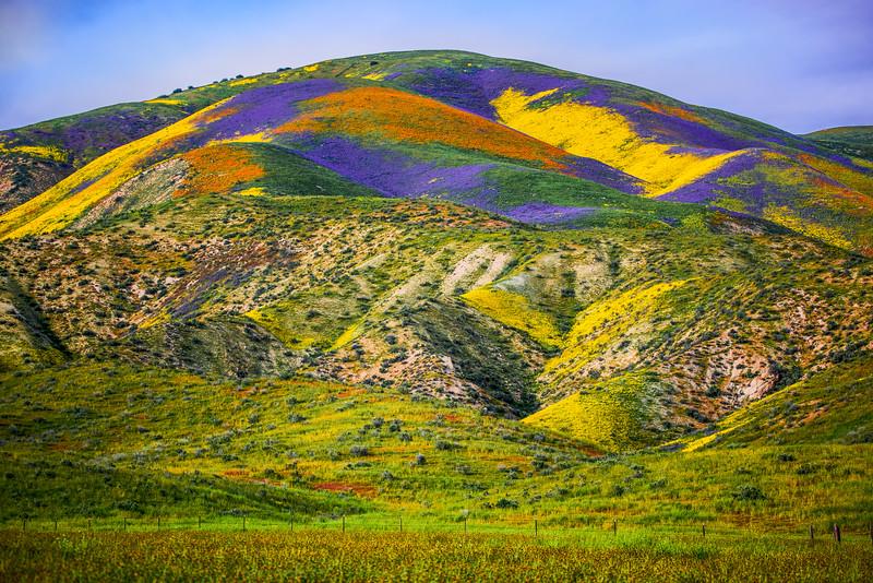 Spring Symphony #3: Carrizo Plain Superbloom California Fine Art Landscape Nature Photography Prints & Wall Art