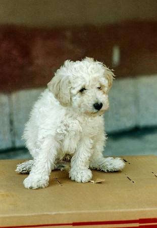 1991 Ollie