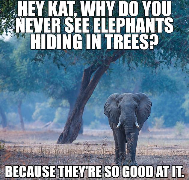 Elephant Hiding In Trees.jpg