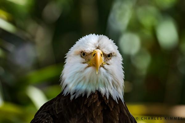 Eagles: 2019