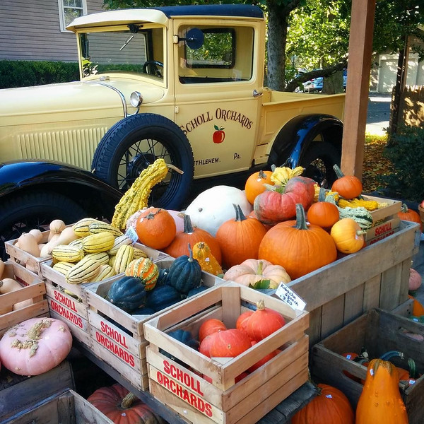 Fresh apple cider and fall gourds at Scholl Orchards