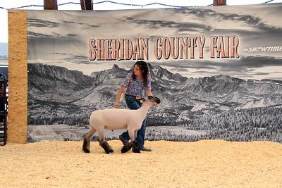 Overall Grand Champion Market Sheep Final Drive