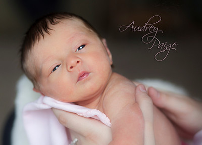 Newborn / Children Galleries