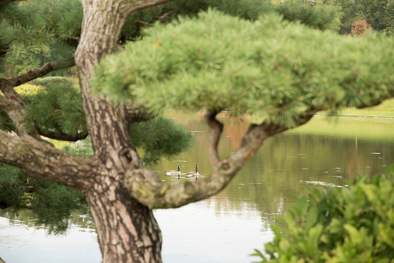 Chicago Botanic Garden 103.jpg