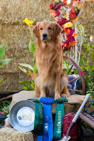 Koa GRCA National Specialty 2016