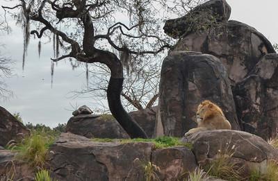 Disney's Animal Kingdom Safari/Orlando/FL - March, 2013