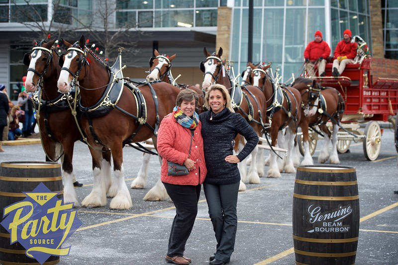 Clydesdale Portraits 20.jpg