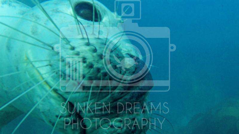 Lundy Island Edit.Still089.jpg