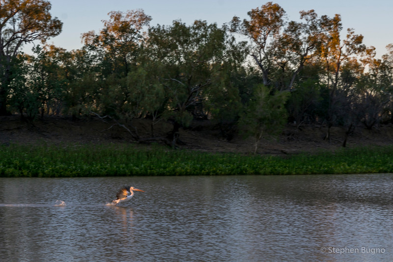 Thompson River in Longreach, QLD.
