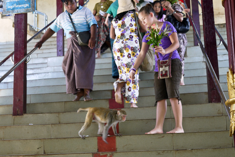 Ana feeding the monkeys on Mt Popa in Bagan, Burma (Myanmar)