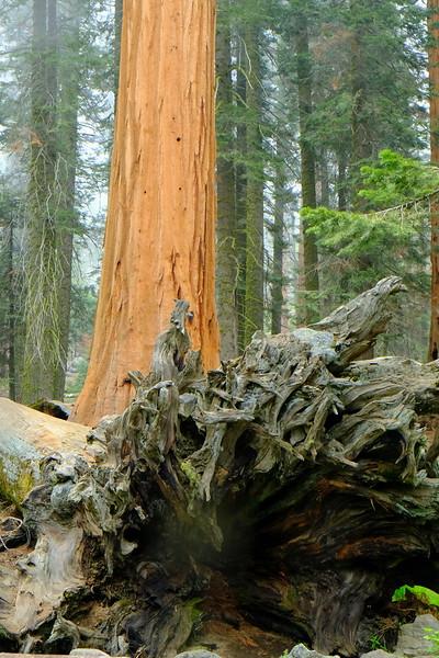 California Day 6 Sequoia 05-30-2017 113.JPG