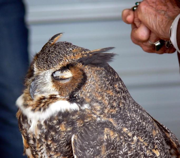 Eagle Lady Doris at ILSP 017.jpg