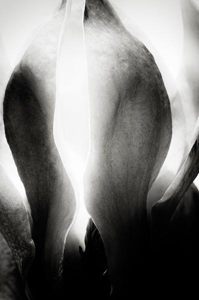 magnolia-01.jpg