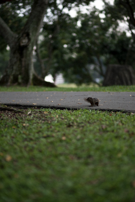 Singapore-day5-AlexGardner-100913-08