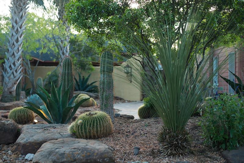 htx-cactus-space026.jpg