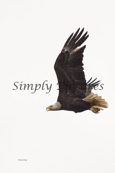 Eagle 6002349 - Copy