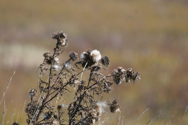 Pleasant Pheasant Branch: Vivid Colors of a Prairie Fall