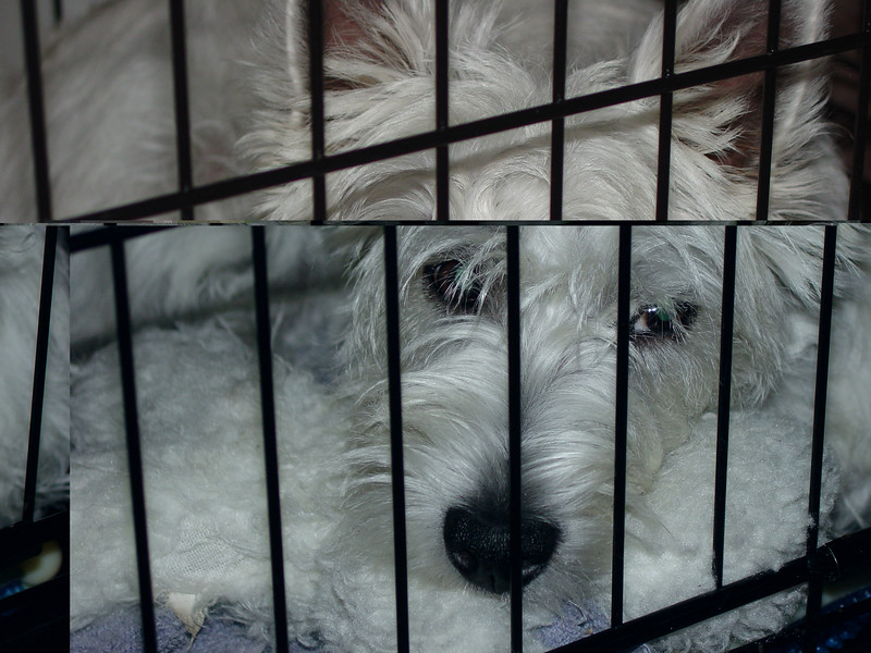Maggie In the Crate 2.JPG