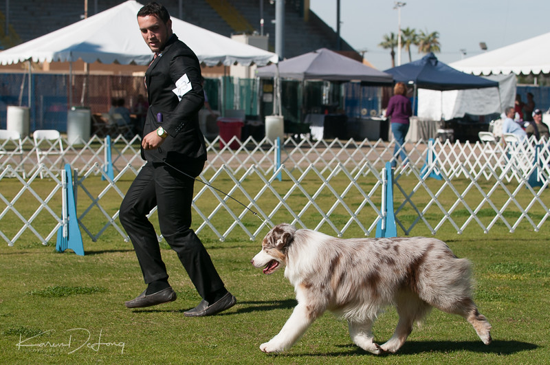 20170205_Australian Shepherds_Lost Dutchman Kennel Club-202.jpg